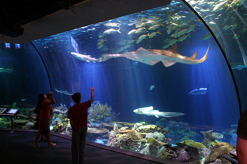 sea-world-ancol.jpg